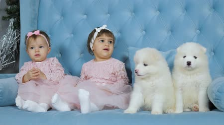 identical : childhood, cute twins with bows on head sit beside two white fluffy puppies on blue sofa