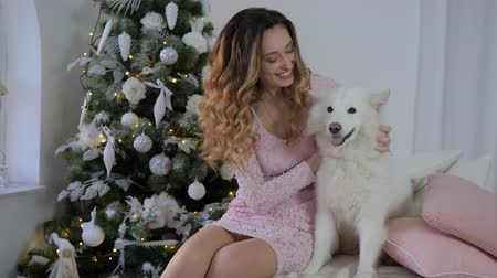 samoyed : happy girl caresses a Xmas Samoyed dog on bed in morning on background big beautiful christmas tree Stock Footage