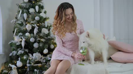 samoyed : Samoyed dog drinks from a glass near smiling young female on bed on background of decorated Christmas tree Stock Footage