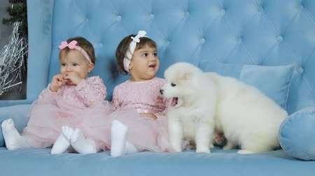 identical : twin sisters in pink dresses and bows on head near white fluffy puppies sit on blue sofa