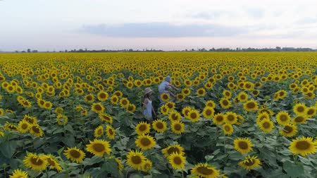 строк : children on nature walk around the field with sunflowers and enjoy the fresh air in slow motion, aerial shooting from drone Стоковые видеозаписи