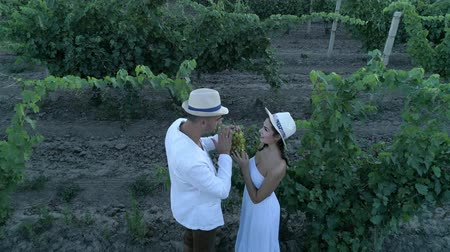 parreira : farmer pair in countryside at vineyard communicate with each other during harvesting, aerial view Stock Footage