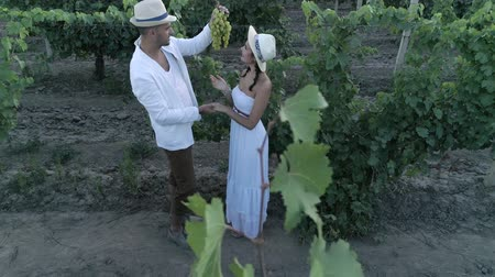 parreira : vineyard, aerial view on young man and woman farmers together in straw hats looks at bunch of grapes