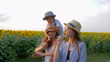 harvesting : children enjoy lollipops during a walk in the field with sunflowers in straw hats together outdoors