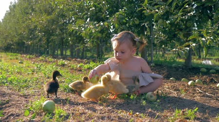cowherd : rural childhood, happy kid is played with small canard in garden during harvest season in autumn