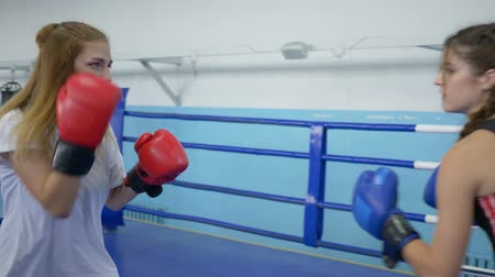 combativo : female boxers in gloved training and fighting together on ring in sports club Stock Footage