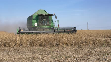 soya : KHERSON, UKRAINE - OCTOBER 01, 2018: Combine harvester gather crop of soybean in field against blue sky Stock Footage