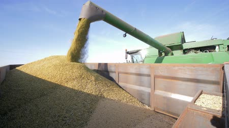 соя : agricultural industry, unloading soybeans from combine in the lorry on field during the autumn harvest Стоковые видеозаписи