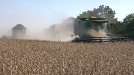 soya : harvester machines working in field during harvest soybean at autumn, agricultural industry