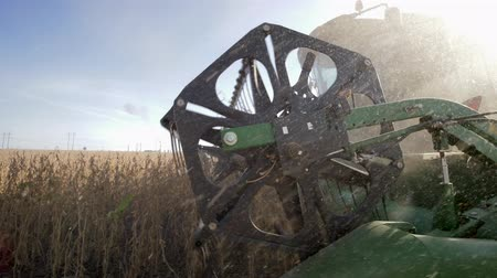 soya : agricultural equipment in the dust, harvesting of soybeans in the field close up at autumn season