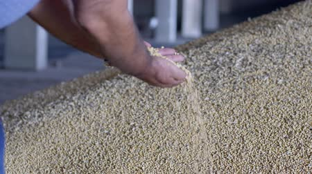 soy : agrobusiness, soybean in a hands of successful farmer after good harvest in slow motion Stock Footage