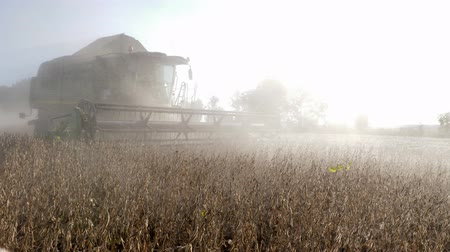 soya : KHERSON, UKRAINE - OCTOBER 01, 2018: harvesting soybean in backlight, combine harvester in the dust works in autumn season on the field