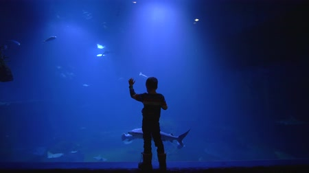 stingray : tourism and entertaiment, small boy stay near big aquarium tank watching the sharks, stingrays and school of fish