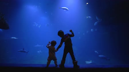 stingray : oceanarium, eldest brother is holding the hand of the younger standing near large aquarium and watching at underwater world with curiosity