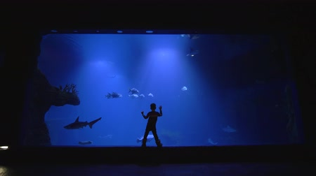 shark : oceanarium, child boy studies the stingrays, whale sharks and school of fish in large aquarium at zoo