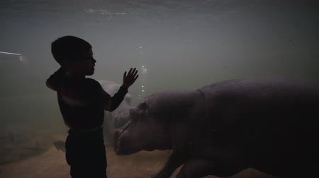 hippo : marine park, child boy waves hands to hippos floating in the aquarium