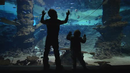 stingray : marine life, curious children watch fishes swimming in a large aquarium Stock Footage
