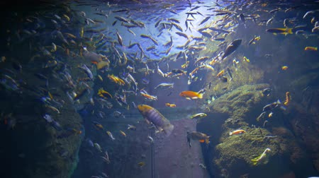 разница : fish oceanarium, different water animal species swimming in large aquarium at zoo Стоковые видеозаписи