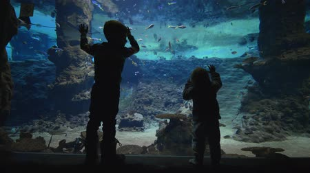 stingray : family vacation, curious small boys near a large aquarium watching underwater world life of fishes