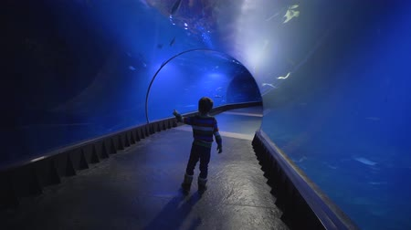 shark : curious tourist kid in aquarium tunnel admiringly looks at different fish that swim in blue water