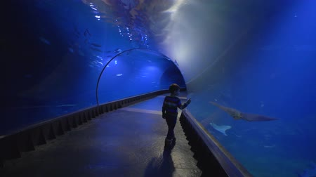 stingray : curious tourist child walks in aquarium tunnel and explores beauty of sea and its inhabitants in zoo