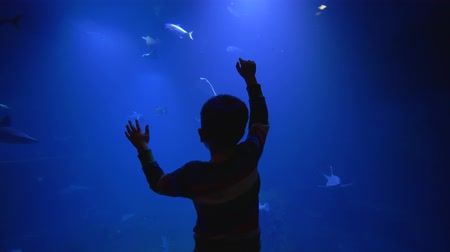 stingray : child boy admires beauty of the underwater world in a cut, fishes, sharks and stingrays swim in blue large aquarium Stock Footage