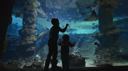 siluro : children in aquarium, little kids boys see underwater world of fish and stingrays swimming in large oceanarium with marine nature in clear blue water