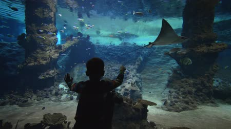 siluro : fish zoo oceanarium, small children boys look fish and stingrays floating in large aquarium with marine nature in clear blue water