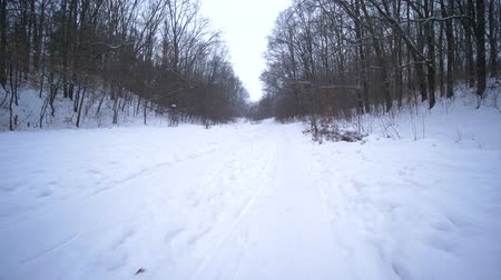 そり : holiday in forest at winter, dad runs and holds in hand sleigh with the children along the snowy road