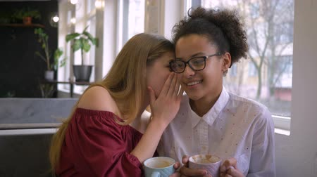 mulâtre : gossip of multi-ethnic girlfriends, funny dark skinned teenager girl are secret talk secrets and laugh with Caucasian friend with cup coffee in hand in cafe at leisure time
