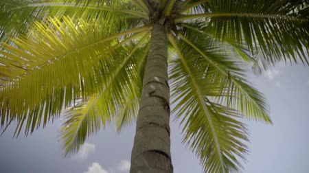 maldivas : green tropical palm close up against sky in sunlight