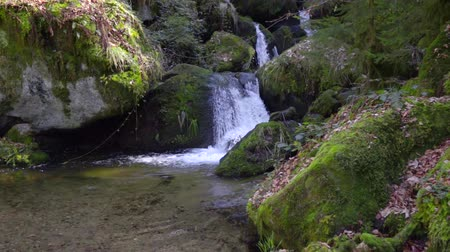 beken : beautiful mountain waterfall, clean fresh water flows over large green mossy stones in Slow motion Stockvideo