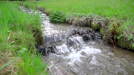 beken : spring beautiful nature, stepped stream of fresh clean water flows between green grass in Slow motion