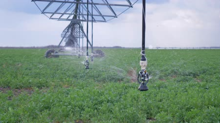 kolza tohumu : agricultural industry, automated irrigation system used to water plants on field close-up