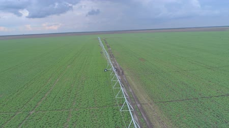 drone view on rural agriculture field with green rapeseed and modern irrigation system