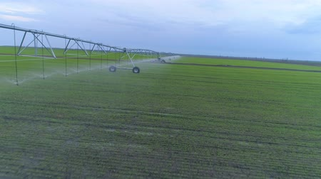 arrosage automatique : irrigation system watering of agricultural land, aerial view on green rapeseed field and blue sky
