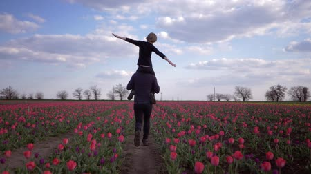 floweret : happy family, young father with child boy on shoulders make plane hands playing into flowers meadow of tulips against sky