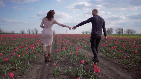 floweret : romantic walk, happy young man and woman holding hands are walking on flower field of red tulips spring against clear blue sky