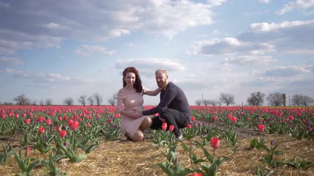 csöves virág : happy trip to blooming field, pregnant woman future mother with belly enjoying holiday with husband on flower lawn of tulips against blue sky Stock mozgókép