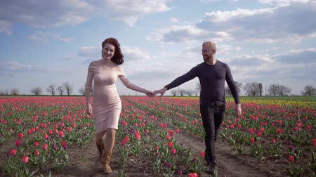 luck : young family waiting for baby in belly together holding hands walking on flower meadow of pink tulips against blue clear sky