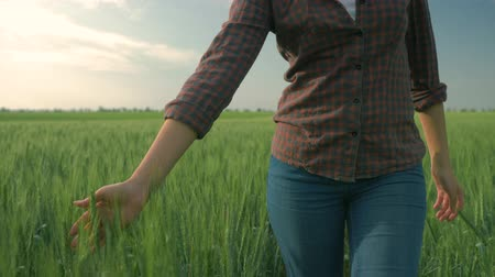 愛撫 : agronomist girl caressing green plants on organic farm while walking in the barley field on background of sky close up