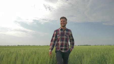 клетчатый : smiling farmer waves his hand and shows an approval sign while walking through a barley field on background of blue sky Стоковые видеозаписи