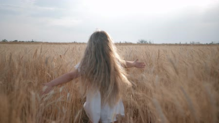 verim : agribusiness, little girl run happily across grain harvesting field sliding her hands over the golden spikelets of ripe wheat in crop season