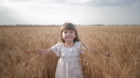 verim : happy childhood, little merry smiling child girl runs and touch riped fair wheat spikelets in the grain harvest field Stok Video