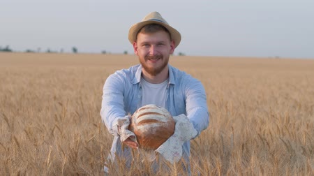sucessful : sucessful young farmer, happy rural guy gives you tasty rooty and smiles staying in grain wheat bread field at autumn sunny harvest time