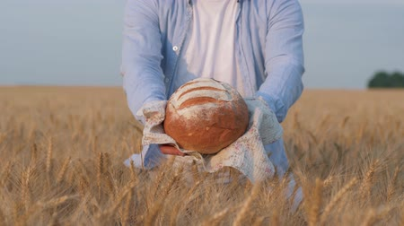 verim : bread harvest, man hands present and give you baked bread on white towel in autumn matured grain barley field at yielding time against sky Stok Video