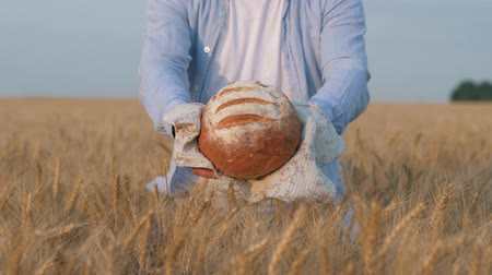 amadurecida : good harvest, farmer hands give you ruddy loaf of bread on white napkin in reaped golden grain wheat field Stock Footage