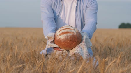amadurecida : rich bread crop, male hands shows and gives you freshly baked rooty on white serviette at camera in reaped grain wheat spikes of crop field Stock Footage