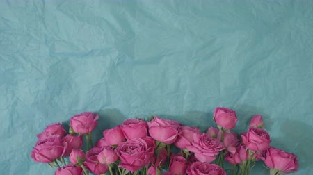 pink roses on blue paper, top view beautiful natural flowers on background with copy space for text Stock Footage