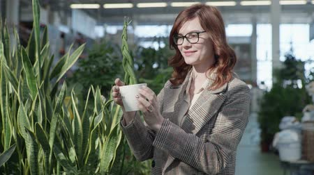 comparar : attractive young woman chooses beautiful green flowers in a pot for decorating her home or office, while standing in a greenhose background of houseplants in a store Stock Footage